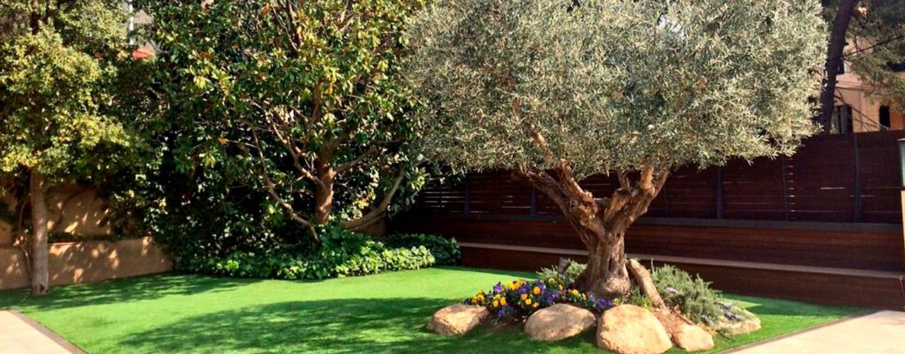 https://www.oliviers-centenaires.com/planter-un-olivier-en-pleine-terre-ou-quand-et-comment
